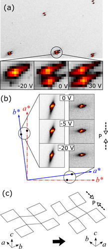 Twin domains in La2−xSrxCuO4 under uniaxial pressure Image